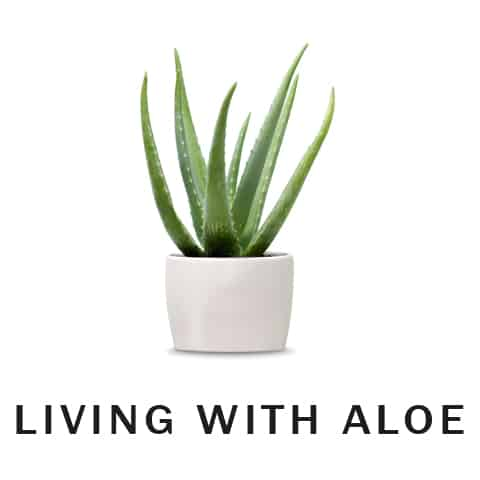 Living With Aloe